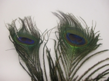 Peacock feathers 30cm 10pcs #8