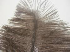 Ostrich feathers 35cm  2pcs #22 brown