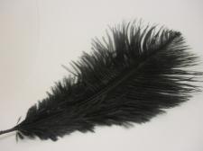Ostrich feathers 20cm 5pcs #23 black