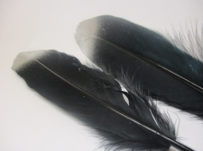 Feathers 18cm #13 10pcs Black silver